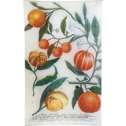 N. 700 Oranges | Vassoio...
