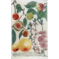 N. 707 Colorful Apples |...