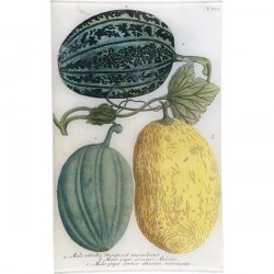 N. 723 Melons Green &...